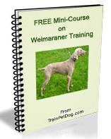 Get your FREE mini-course on Weimaraners