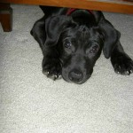 Tips for Bringing Home a New Puppy