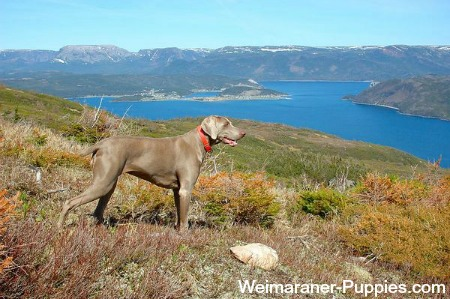 Hunting Dog Names Should Fit The