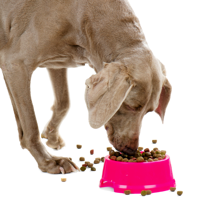 Canned Dog Food For Dogs With Diabetes