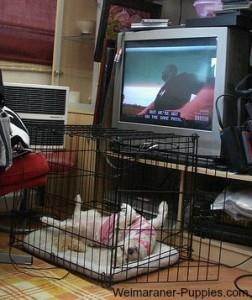 Happy dog in her crate, with the door open