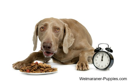 A dog feeding schedule makes things easy for you