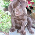 What is the best puppy age