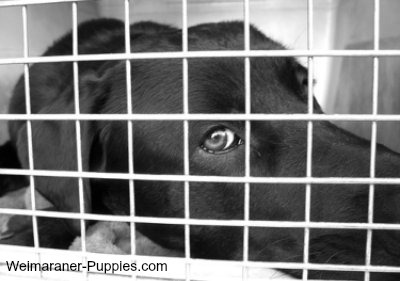 Rules of Crate Training