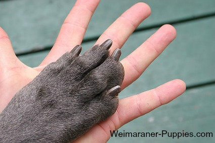 Trimmed dog nails and persons hand