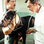 Von Willebrand disease examination by vet