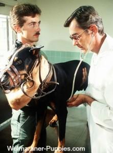 Von Willebrands disease examination by vet