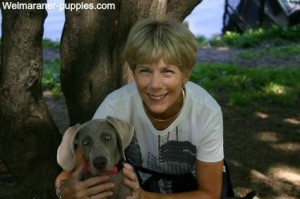 Cute young girl who is working with her Weimaraner puppy