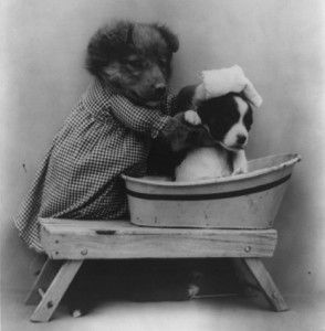 Dog bath time with a dog giving the bath.