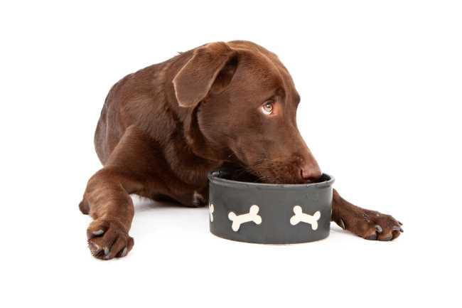 Best diet for Weimaraner puppies