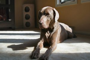 Should you neuter your puppy?