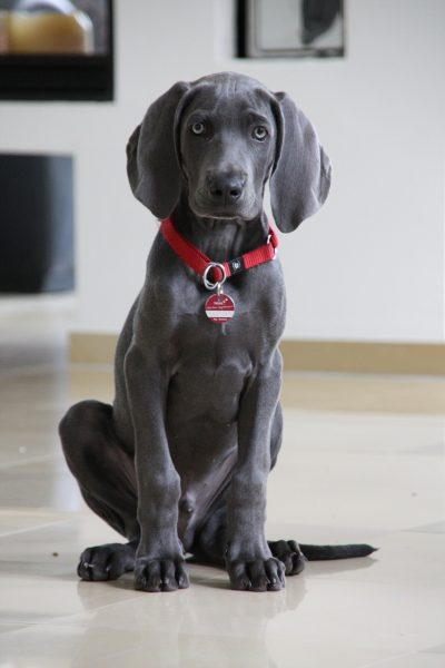 Teach your dog to sit to keep her safe