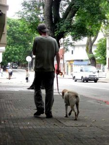 dog limping on a walk