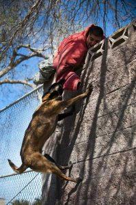 dog attacking man on wall