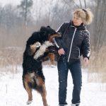 Dog biting woman