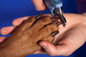 dog grooming trimming nails