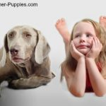 Socialize your dog with children like this one